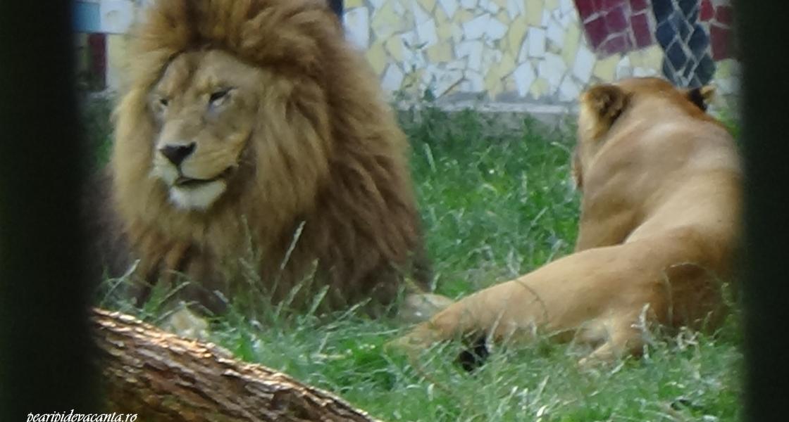 Gradina Zoologica din Targu Mures – spectaculoasa