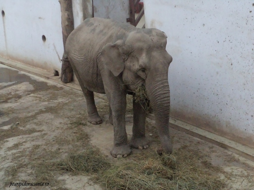 elefantoaica infometata