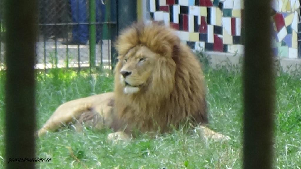 leul visator