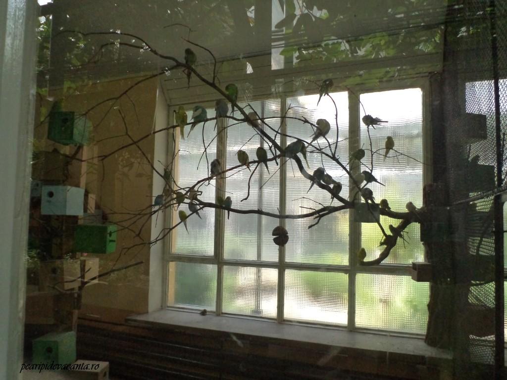 papagali la Gradina Zoologica