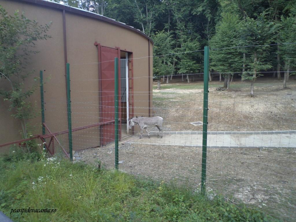 zebra la Zoo