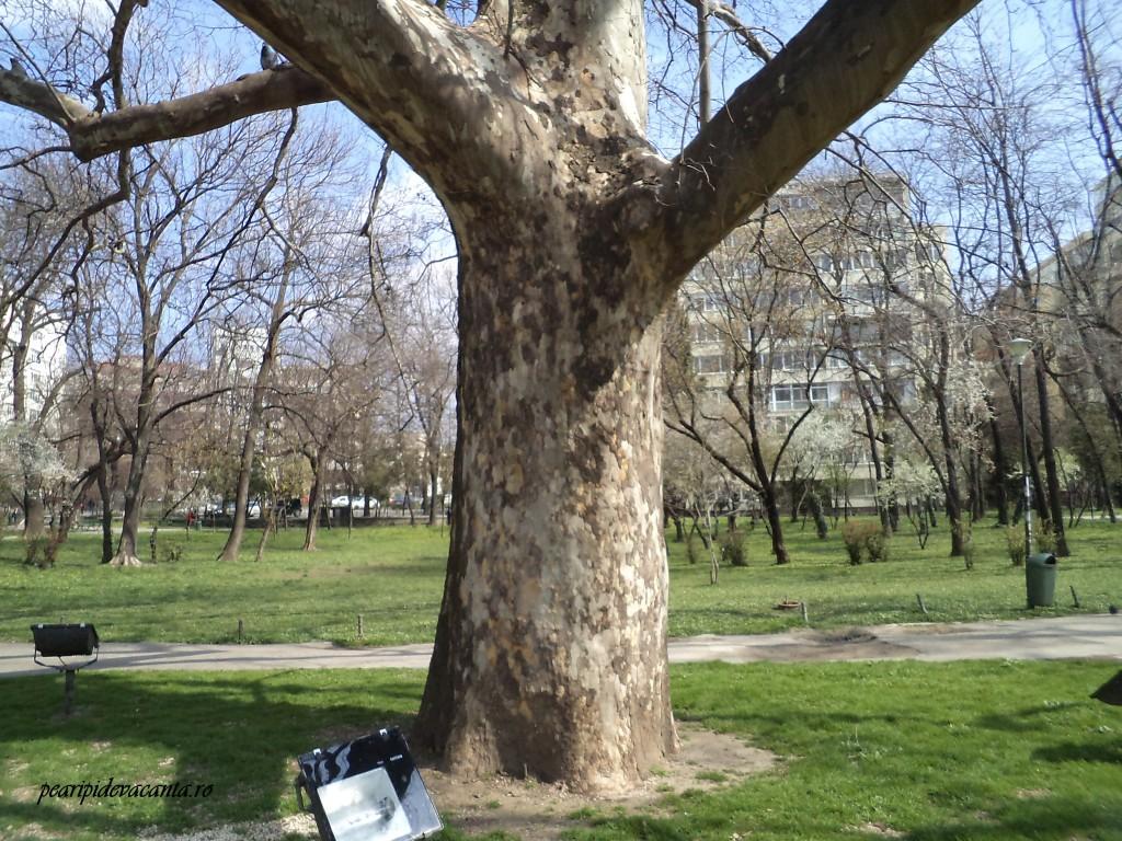 Copac ocrotit
