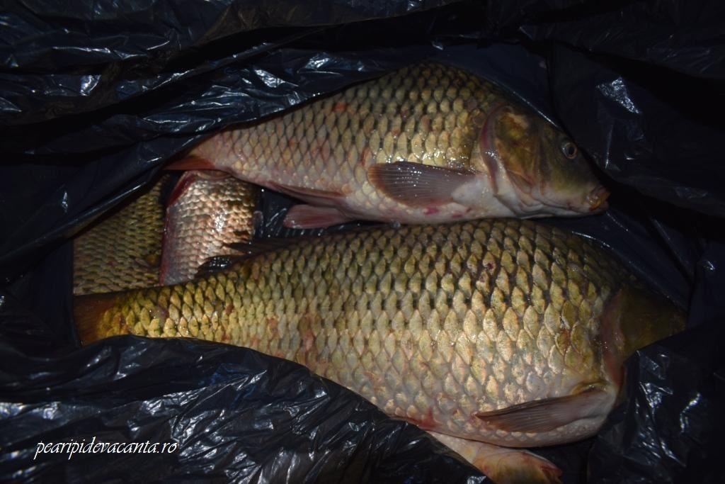 Pescuit Sulina